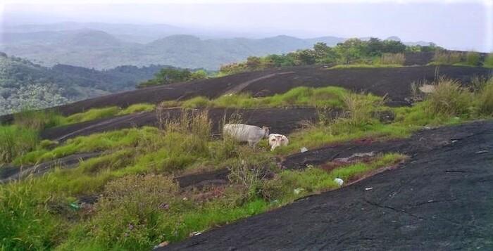 hill station in kottayam, ayyampara, places to visit in kerala