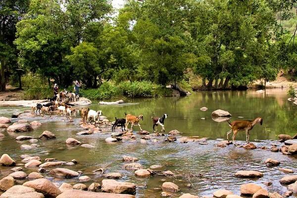 idukki wildlife sanctuary, places to visit in kerala, chinnar wildlife sanctuary