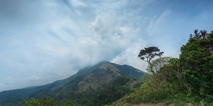 hill stations in palakkad, places to visit in kerala, best honeymoonplaces in kerala, nelliyampathy