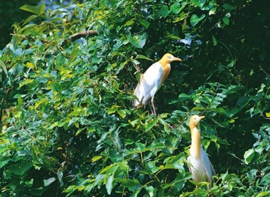 wayanad wildlife sanctuary, places to visit in kerala, pakshipathalam bird sanctuary