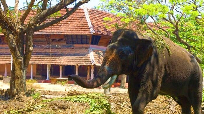 tourist places in thrissur, punnathur kotta
