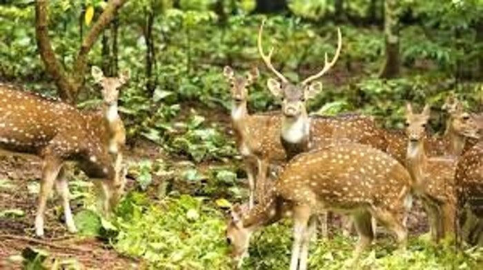 parks in kollam, thenmala park,places to visit in kerala