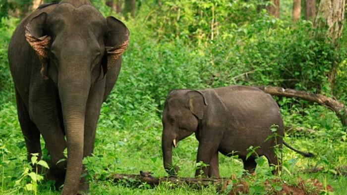 wayanad wildlife sanctuary, places to visit in kerala, tholpetty wildlife sanctuary