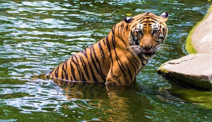 idukki wildlife sanctuary, places to visit in kerala, periyar national park